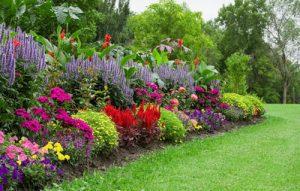 grow a garden